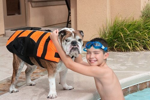 Pet safety tips for swimming pool owners