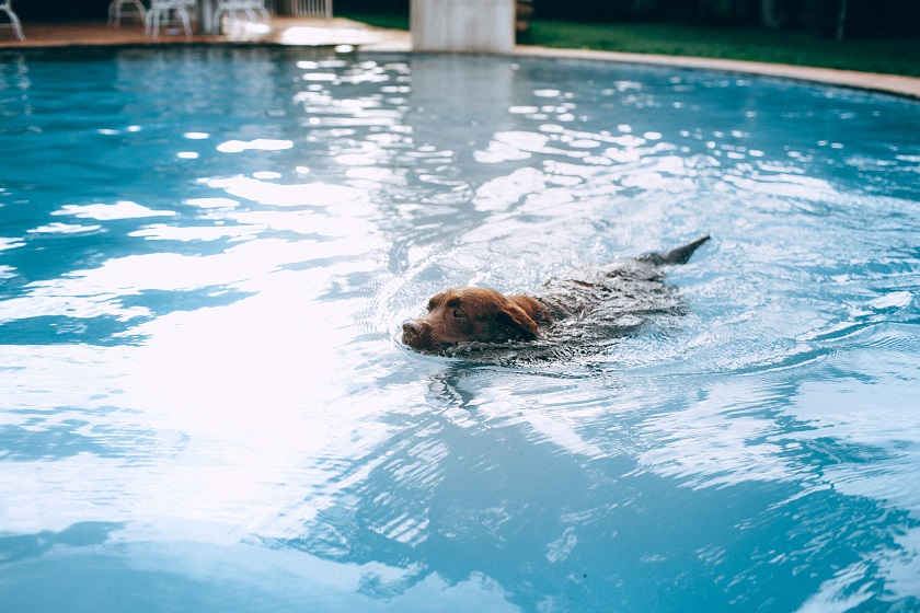 5 ways to keep pets safe around the pool