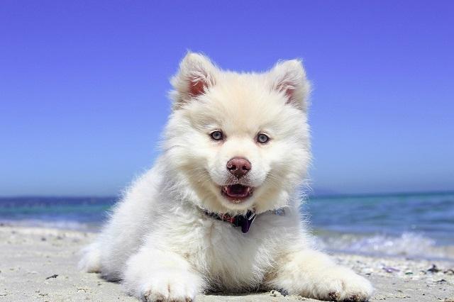 7 ways to keep dogs safe around the pool